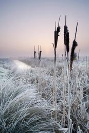 Winter Sunrise Over Marshland