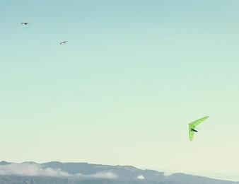 Green Glider & Birds