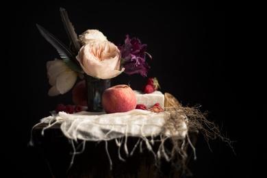 Perzikenen Tuinrozen