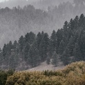 Montana Fog