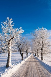 Winter Colonnade