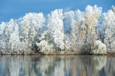 Frost and Reflections 1
