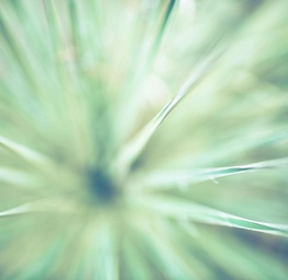 1.4 Yucca