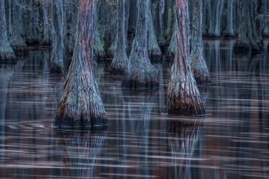 Reflections on the Bayou