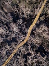 Path Through Pine Log