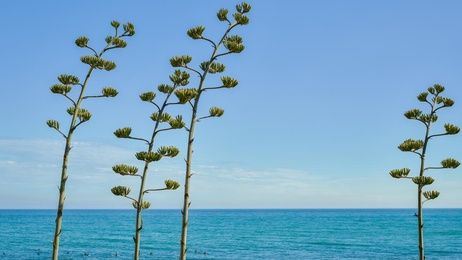 Plants by the Sea - Topanga Beach