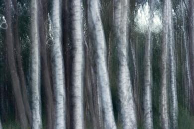 Spirits of Trees