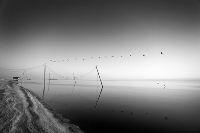 Birds Over Bombay Study 1