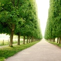 Rows of Trees, Versailles, France