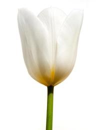 Macro Flower 8