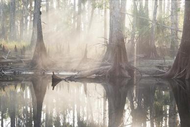 Foggy Fisheater Creek #2