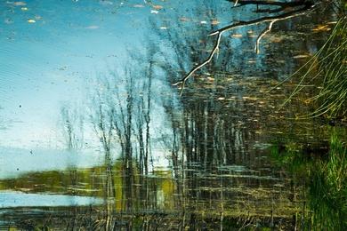 Reflection 42