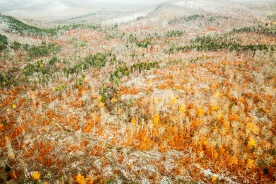 North Maine Woods II