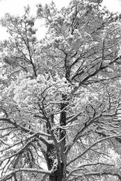 Snow Days #15