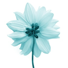 Macro Flower 9
