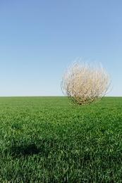 Tumbleweed I