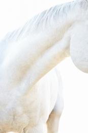 White Horse 11