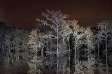 Flooded Cypress #4
