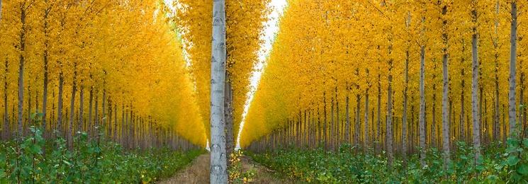 Autumn at the Tree Farm