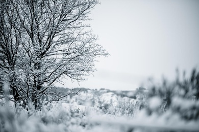 Winter Walk 06