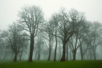 Milwaukee Trees