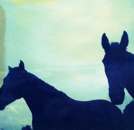 Polaroid Horses
