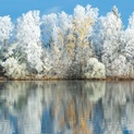 Frost and Reflections 2