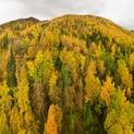 Autumn in Alaska 1