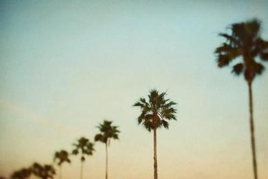 The Palms 3