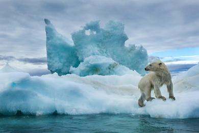 Polar Bear Kingdom