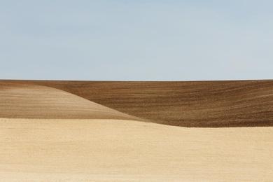 Palouse Field II