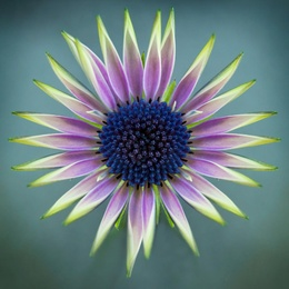 Macro Flower 25