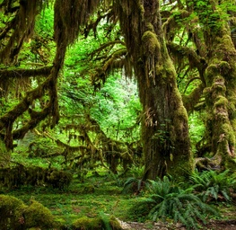 Hoh Rainforest - II