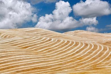 Harvest Stripes.jpg