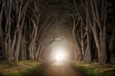 Cypress Tree Tunnel 2