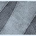 Leaf Lines III - Blue Tones