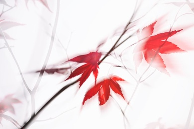 Red Maple Leaves Abstract