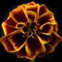 Botanical 52