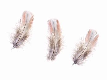 Feathers #10