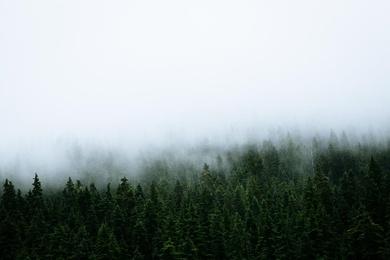 Rocky Mountain Mist