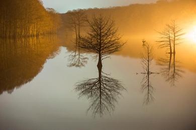 Flooded Cypress #5