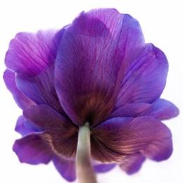 Macro Flower 19