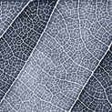 Leaf LInes III - Cool Tones Blue 2