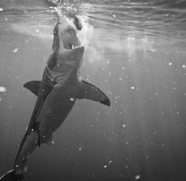 Big Mouth - Sharks