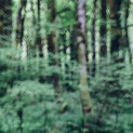 Alder Forest Abstract III