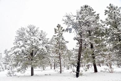 Snow Days #11