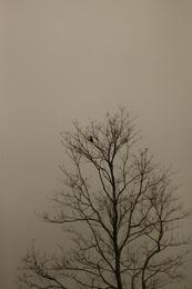 Mist and Bird