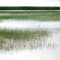 Coastal Marsh I