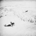 Imaginary Deers