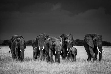 Elephant Family, Amboseli Kenya